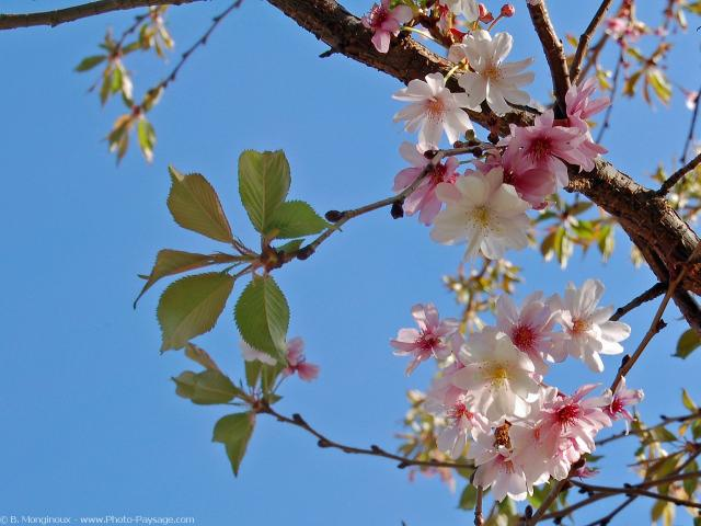 normal_fleurs_de_printemps-1